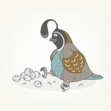 Cartoon Character Of A Bird. Funny Cute Funny Cute Quail Sitting Next To Quail Eggs And Posing. Vector Illustration