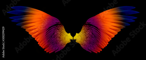 Pinturas sobre lienzo  wings isolated on a black background
