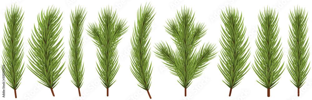 Fototapeta fir branch collection for christmas designs
