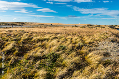 Windy grassy pampas in Chile