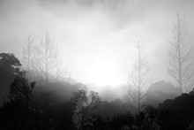 Silhouetted  Trees And  Fog In...