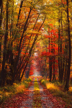 Autumn Forest At Morning With ...