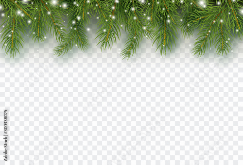Border with green fir branches isolated on transparent background. Pine, xmas evergreen plants banner. Vector snow Christmas tree garland. - 300338025