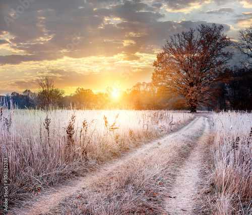 In de dag Weide, Moeras Transitional season of autumn to winter. A dirt road among plants in white hoarfrost leading to a mighty oak tree in golden leaves at dawn.