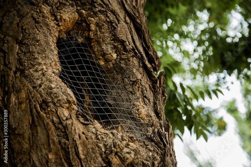 detalle de árbol con alambre Canvas Print