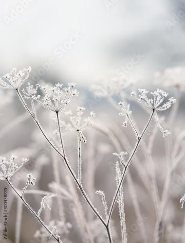 delikatne-suszone-kwiaty-na-mrozie