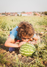 Boy Kissing A Watermelon. A Little Boy With Dark Curly Hair In The Summer On A Sunny Day Sitting Next To A Large Watermelon On A Melon Field.