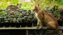 Local Cat And The Visiting Cat Sat On The Cactus Table