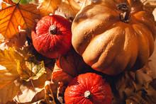 Banner Of Thanksgiving Pumpkin...
