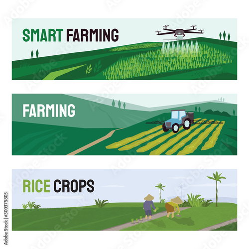 Set of vectors with agriculture, smart farming and rice crops cultivation Wallpaper Mural