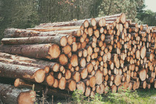 Wooden Logs With Forest Background