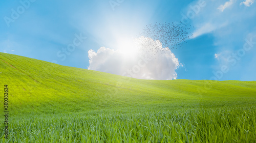 Spoed Fotobehang Weide, Moeras Silhouette of birds flying above the green grass field with sun rays