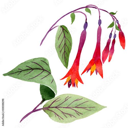 Red fuchsia floral botanical flowers Fototapet