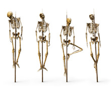 Group Of Skeleton's Impaled On...