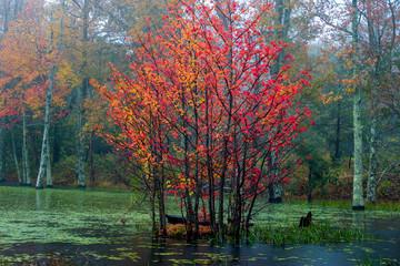 Fototapeta Jesień Fall Color in the Pond