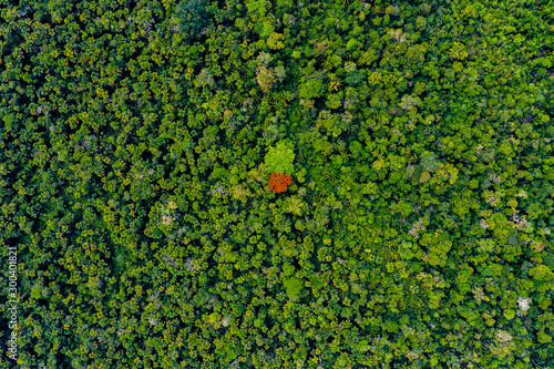 amazon forest river iquitos peru Wallpaper Mural