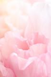 Closeup view of pink eustoma flower. Soft pastel wedding background.