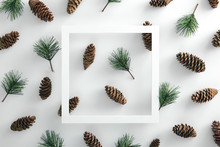 Pine Cone And Evergreen Branch