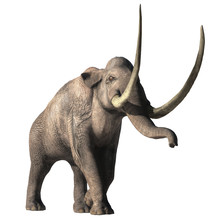 The Columbian Mammoth Is An Ex...