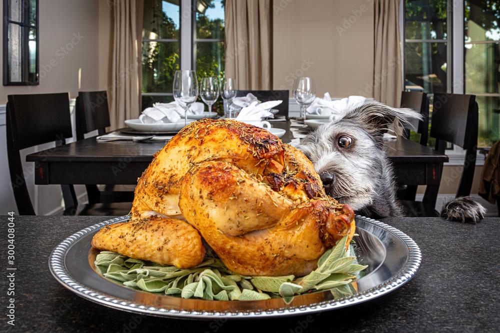Fototapety, obrazy: Dog Stealing Thanksgiving Turkey