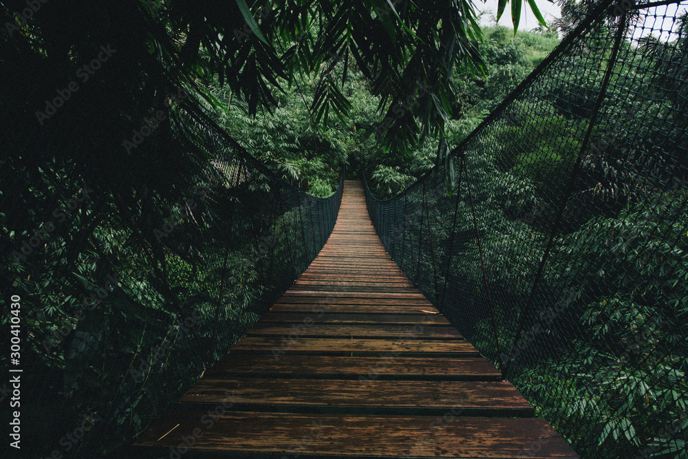 Fototapeta Wooden suspended bridge in a forest