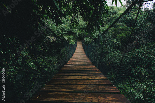 Spoed Foto op Canvas Weg in bos Wooden suspended bridge in a forest