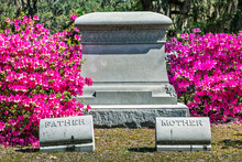 Pink Blooming Azalea Bushes And An Empty Tombstone On Historic Bonaventure Cemetery Near Savannah, Georgia.
