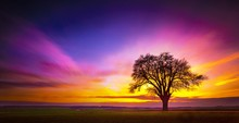Beautiful Tree On A Grassy Fie...