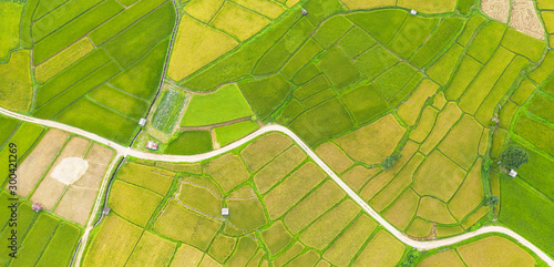 Aerial view of the green and yellow rice field landscape different pattern at morning in the northern thailand