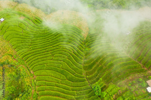 Foto auf Gartenposter Reisfelder Aerial view of the green terraced rice fields landscape different pattern at morning in the northern thailand