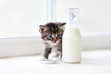 Little Kitten Behind Of Bottle Of Milk