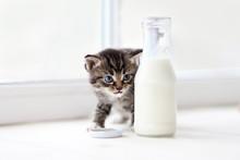 Little Kitten Behind Of Bottle Of Milk