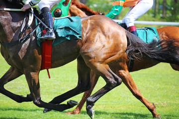 Pferderennen Nahaufnahme