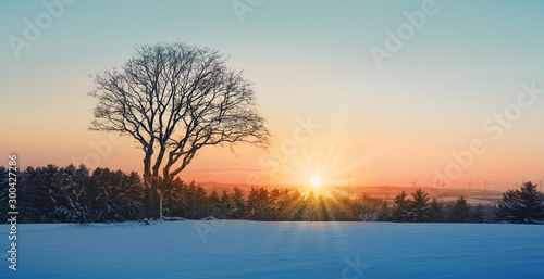 Fototapeta Winter sunset over the snow covered tree.Nature background. obraz