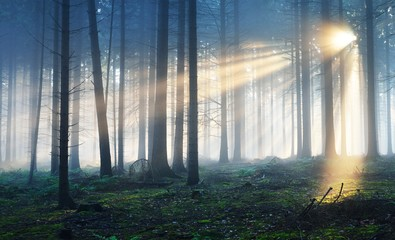 Sun rays in a dark foggy misterious forest. Osnabruck, Germany