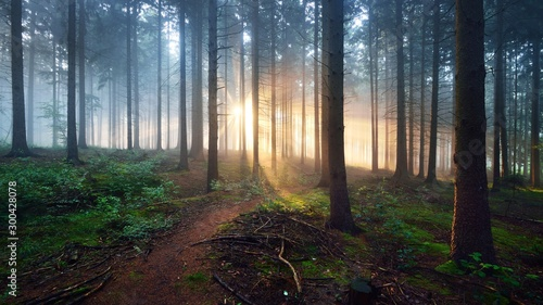 Fotobehang Bomen Overgrown path in a dark misty forest with sun rays. Osnabruck, Germany