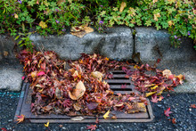 Flooding Threat, Fall Leaves Clogging A Storm Drain On A Wet Day, Street And Curb