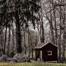 Beautiful Shot Of A Small Wood...
