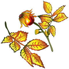Vector autumn yellow rose hip leaves. Leaf plant botanical garden floral foliage. Isolated illustration element.