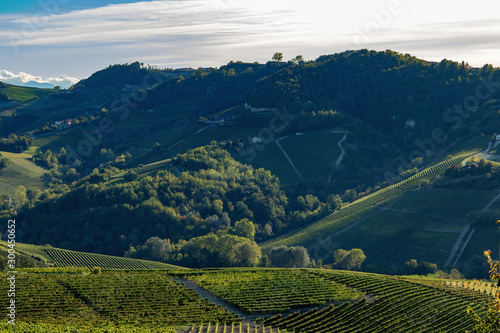 Piedmont area in Italy looking over the vineyards a week before harvest with sun Wallpaper Mural