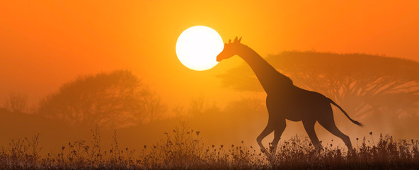 Running giraffe at sunset