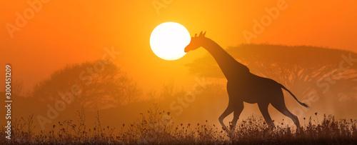 Montage in der Fensternische Rotglühen Running giraffe at sunset