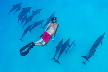 Man Swimming With A Pod Of Spinner Dolphins (Stenella Longirorstris) Over Sand In Sataya Reef, Egypt, Red Sea