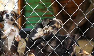 Cage with homeless dogs in animal shelter. Concept of volunteering