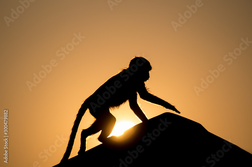 monkey silhouette climbing on a roof with sun