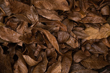 Autumn Pattern Background And Texture Of Brown Rotten Leaves That Lie On The Ground.