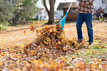 Man Raking Leaves In The Backy...