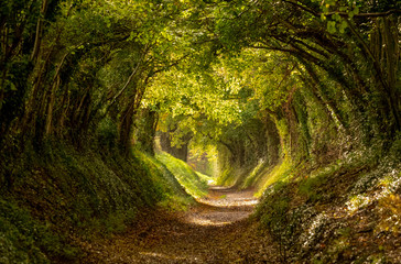 Halnaker tree tunnel in West Sussex UK with sunlight shining in. This is an ancient road which follows the route of Stane Street, the old London to Chichester road.