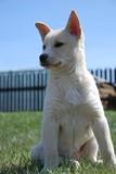 Fototapeta Zwierzęta - Mój przyjaciel pies