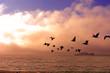 Birds flying toward sunset. Beautiful island in the background.